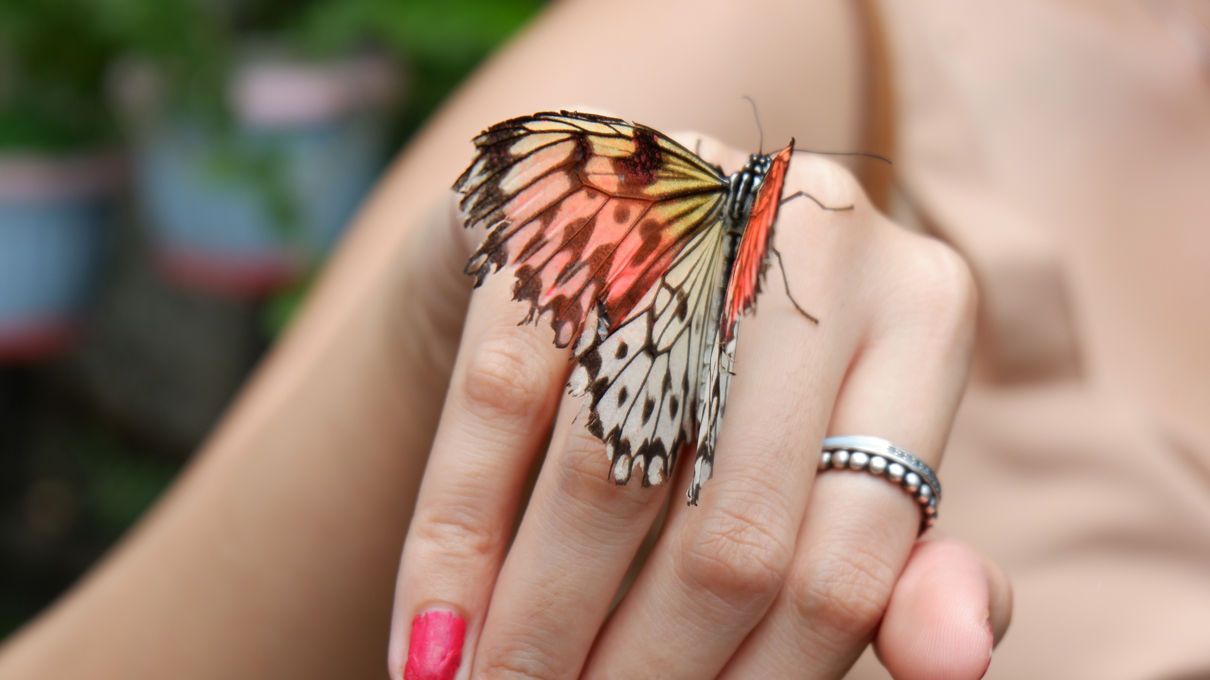 butterfly-farm-marinduque (3)