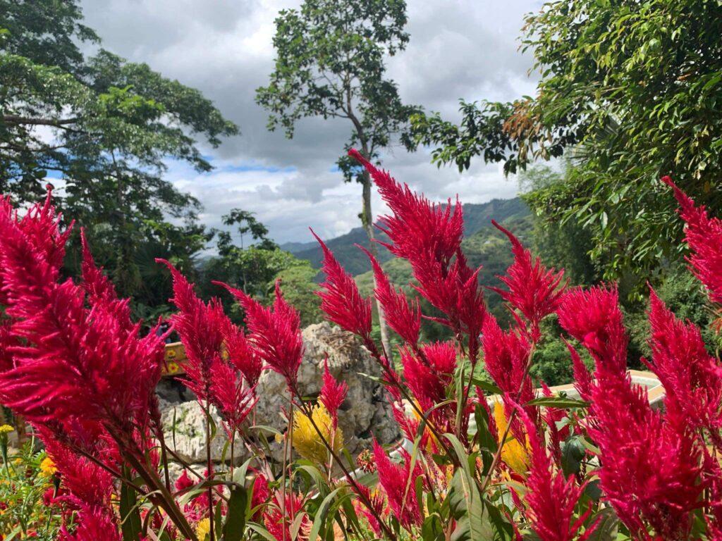 SIRAO FLOWER GARDEN