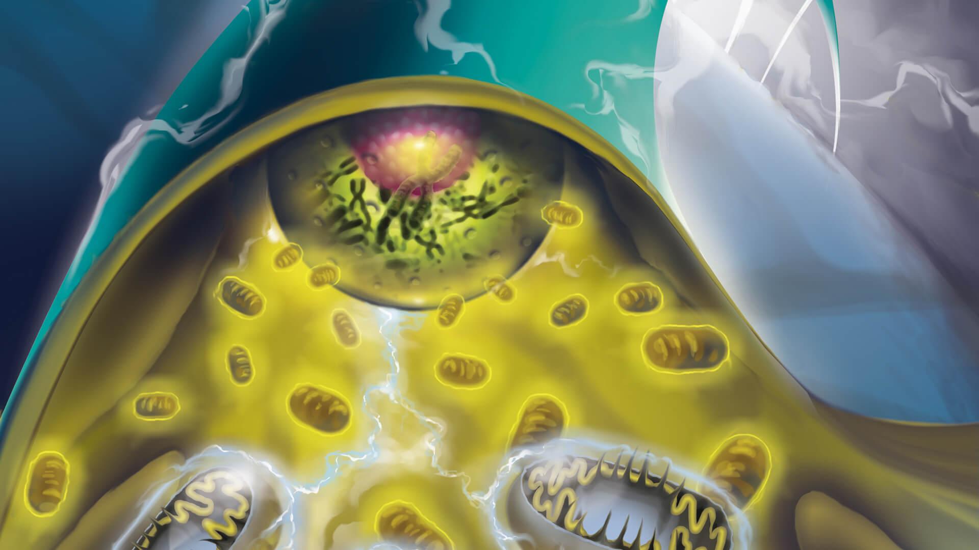 neurofibromatosi italia associazione linfa odv