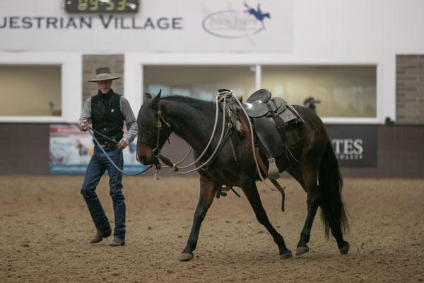 Horsemanship Showcase 2019