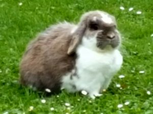 Lightning the rabbit