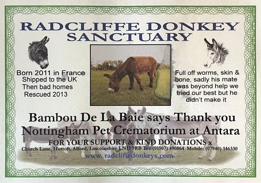 Bambou De La Baie at Radcliffe Donkey Sanctuary thanks to support from Nottingham Pet Crematorium