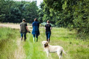 Local Dog Walks