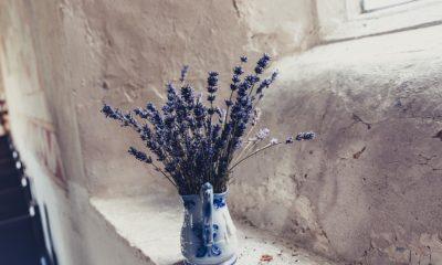 Biljke koje treba staviti u spavaću sobu za bolji san!