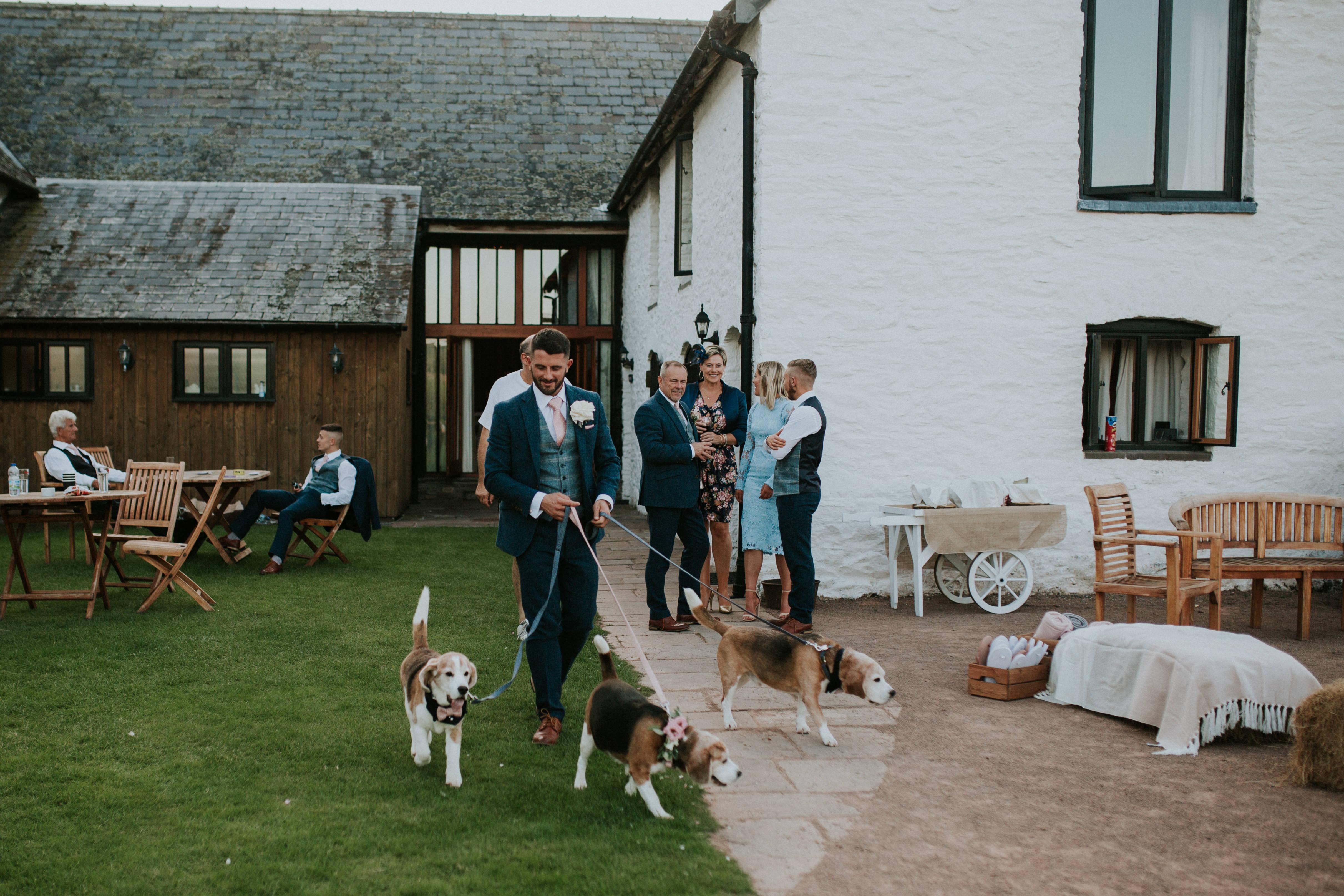 groom walking dogs