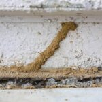 Can I Treat My Home for Termites Myself?
