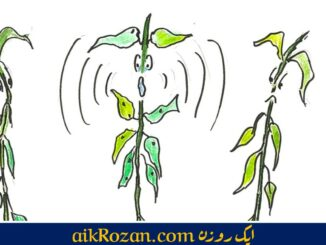Plants feel plants talk