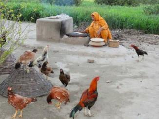 a village in Pakistan