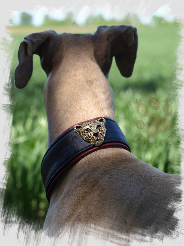 Martingalhalsband selber nähen - Mit Dekoration wie im Foto ein individuelles Hundehalsband.
