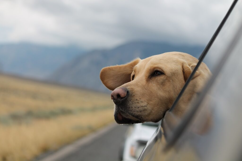 Road tripping with pets
