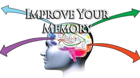 herbs for memory loss to improve memory