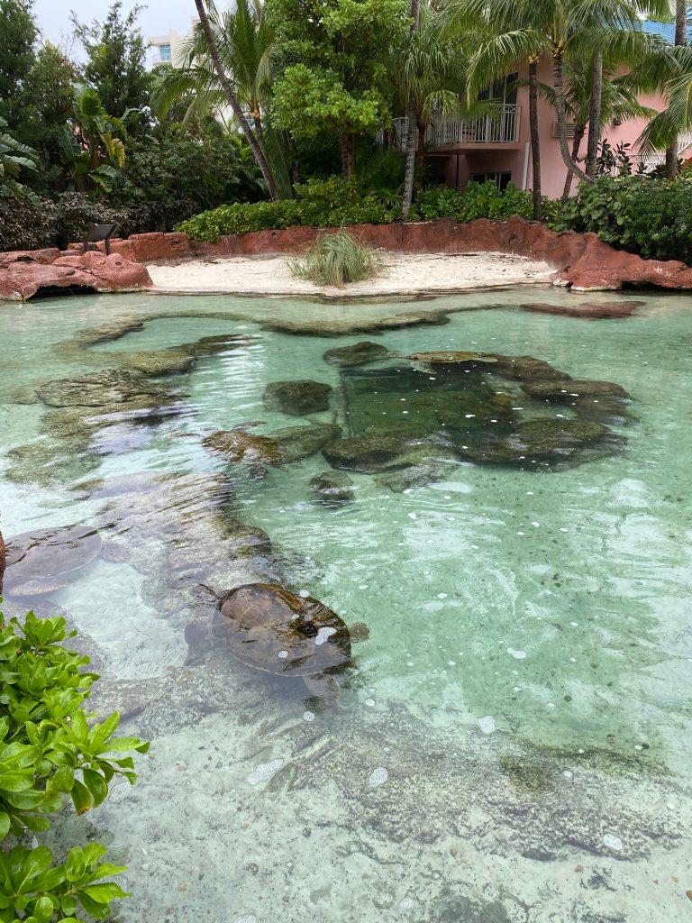Estanque Atlantis