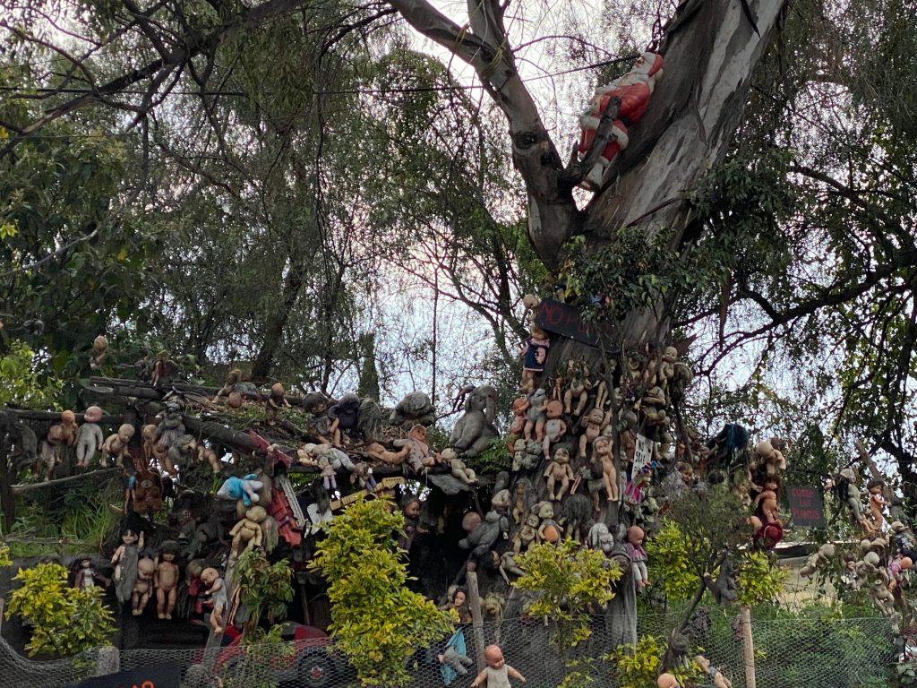 Árbol de las muñecas