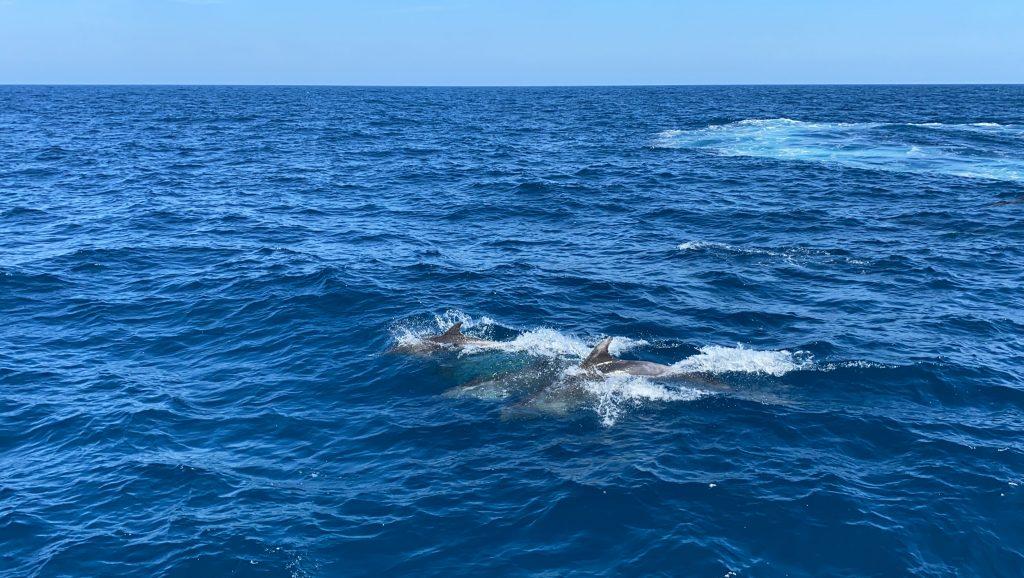 Delfines en Jávea