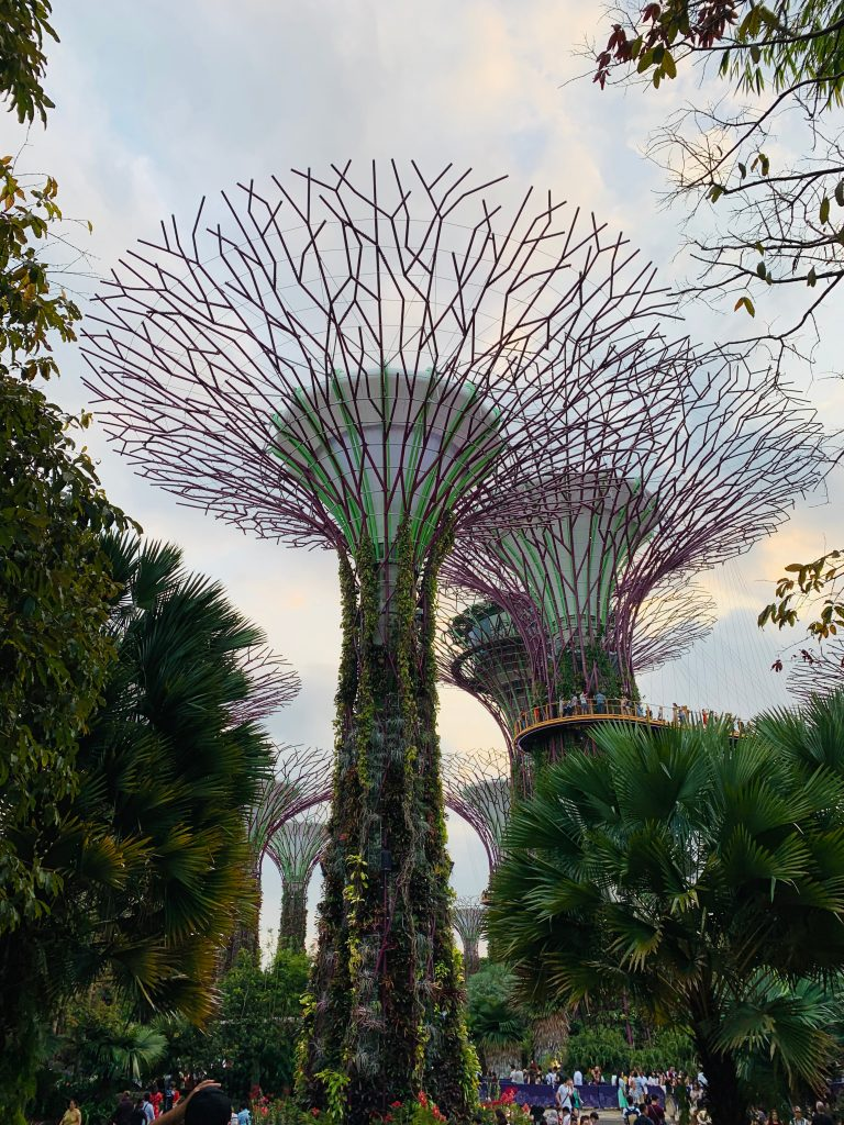 Supertrees on Garden on the Bay