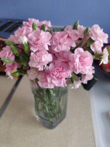 Vase of Pink Carnations