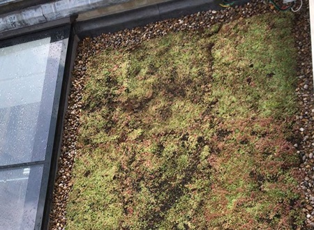 Eco-friendly green roofing Specialists in Hertfordshire