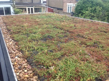 Green roofs in Hertfordshire