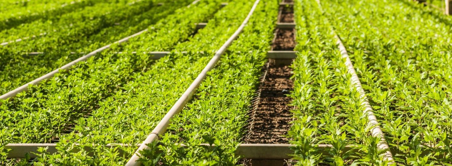 ELIMINATE NITROGEN FROM AGRICULTURAL OPERATIONS