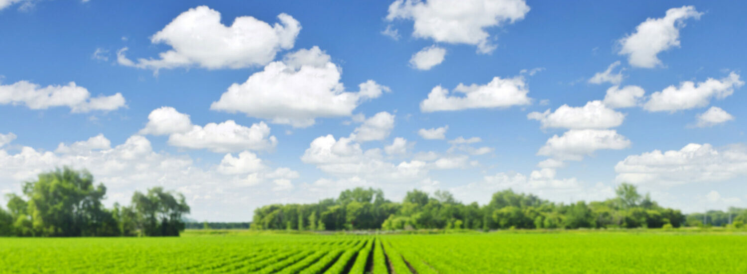 100% ORGANIC AND SUSTAINABLE NITRATE FERTILIZERS