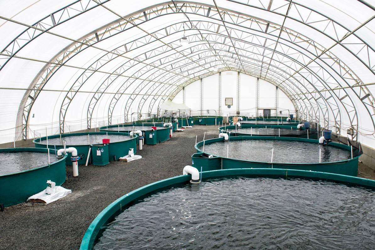LIVESTOCK AND FISH FARMING