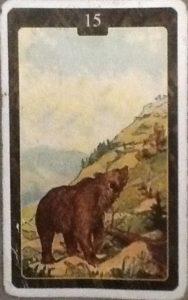 Scarabeo Lenormand Bear Card