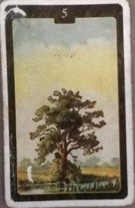 Scarabeo Lenormand Tree Card