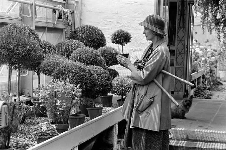 Bunny Mellon in May 1982. She cultivated miniature topiaries, grown from rosemary, myrtlr, thyme and santolina setting off a National Trend. Fred Conran Photography. New York Times.