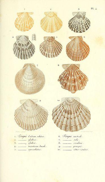 Lecons élémentaires sur l'histoire naturelle des animaux. Paris J.J. Dubochet, Le Chevalier et Ce, Éditeurs,1847