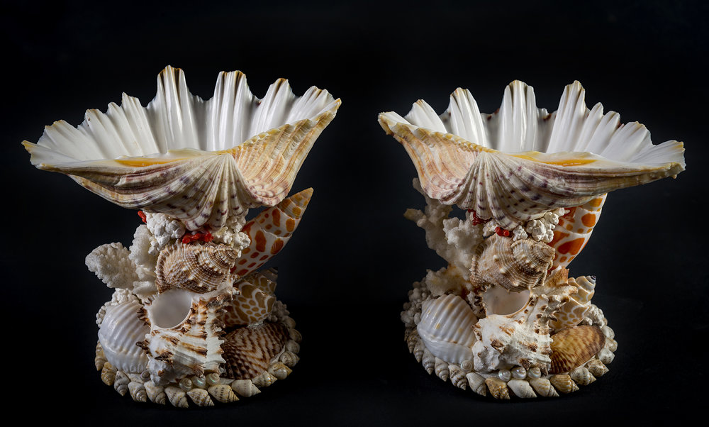 tess morley shell art