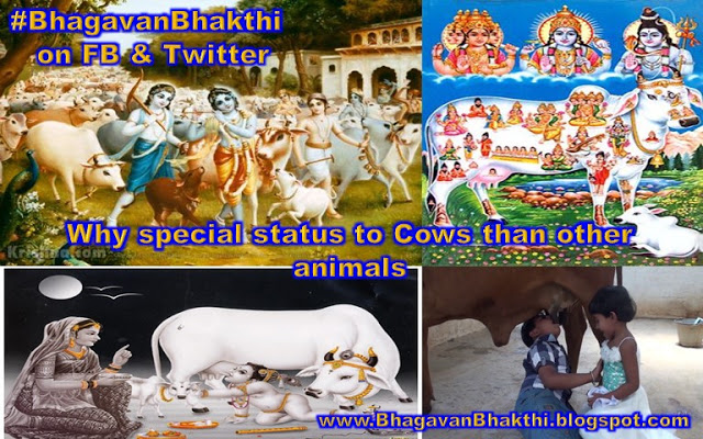 Why special status to Cow than other animals