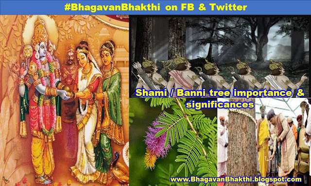 What is the importance of Shami (Banni) tree & significances