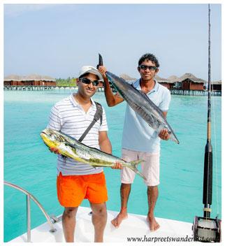 A good day's fishing! Dorado and Wahoo.
