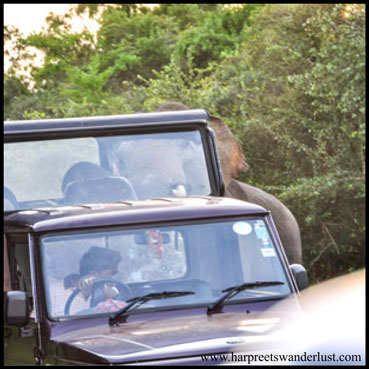 Can you see the elephant sticking its trunk into the jeep?!!!