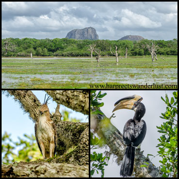 Elephant rock in the plains of Yala, and some interesting birds...a hornbill and owl, I think?