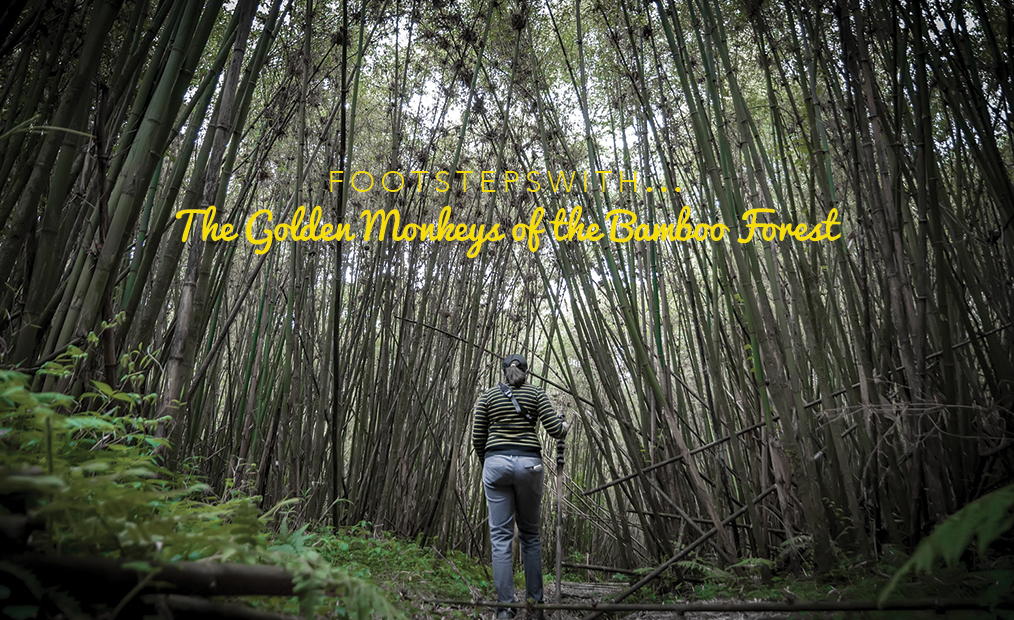 Footsteps…with the Golden Monkeys of the Bamboo Forest