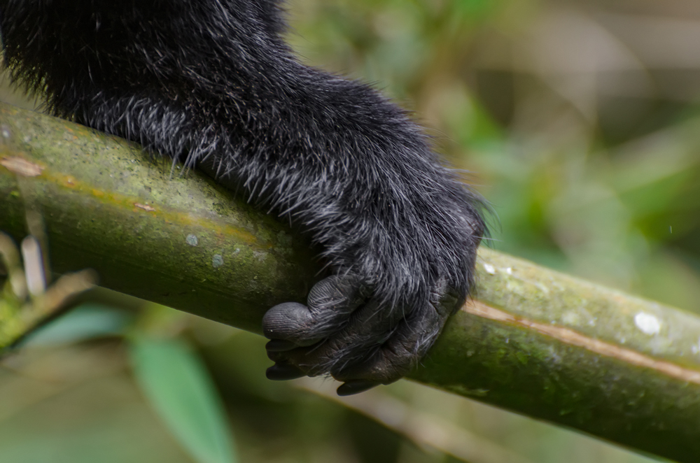 Such cute paws...hands?