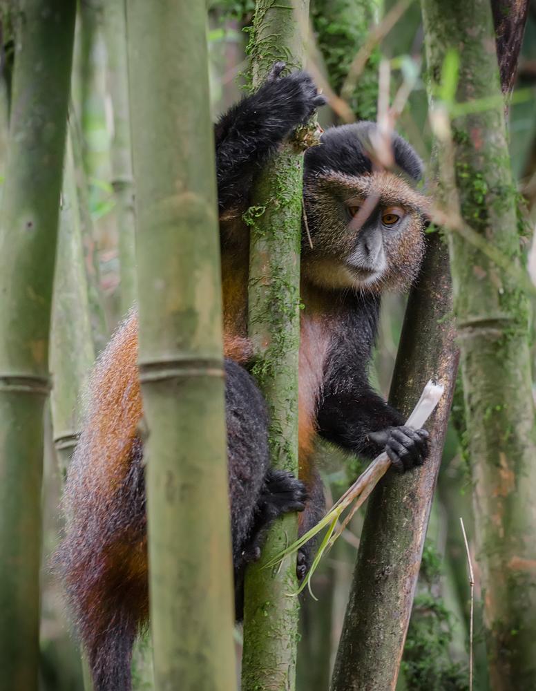 Hide and seek amongst the Bamboo...
