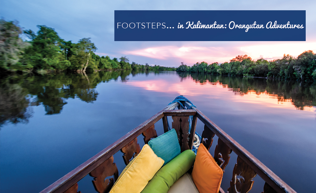 Footsteps in…Kalimantan: Orangutan Adventures!