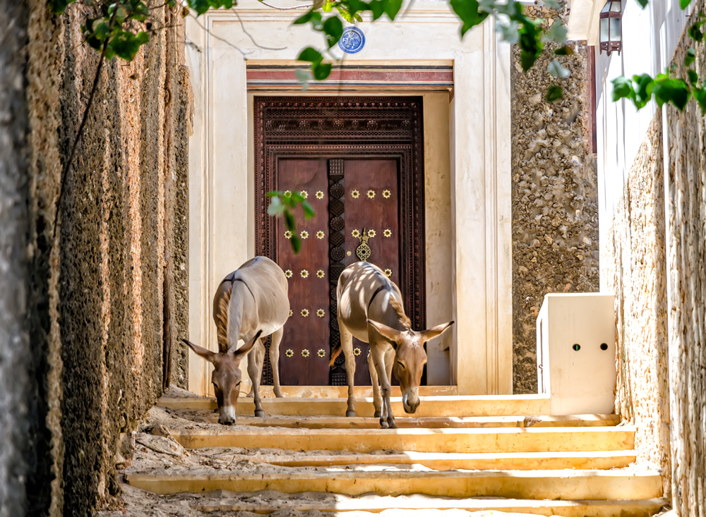 Of donkeys and swahili doors....