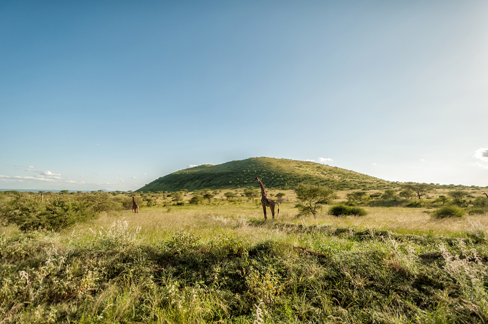 The plains of the Tsavo
