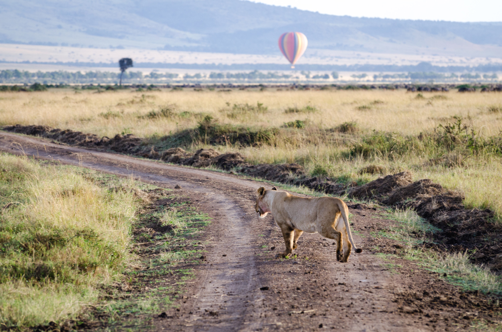 Magical Mara: Lionesses and Hot Air Balloons