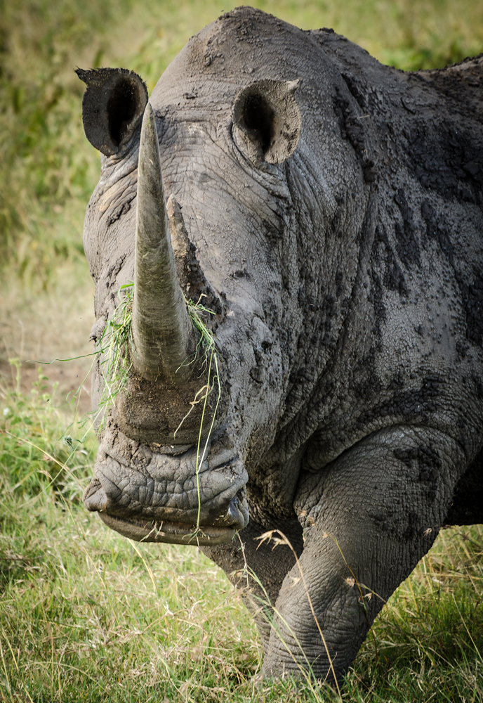 Rhino - one of the Kenyan Big Five