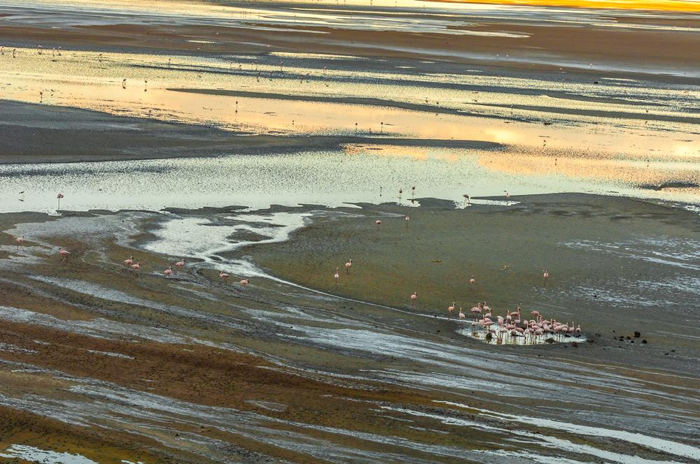 Flamingos on the Western Side of Lake Magadi