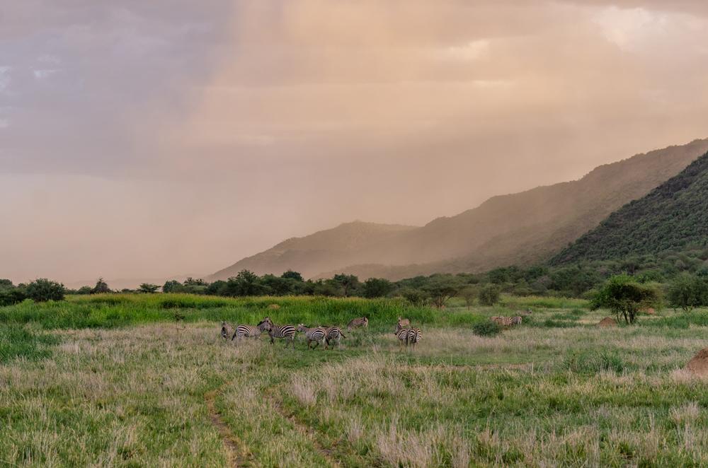 Zebra-in-the-plains