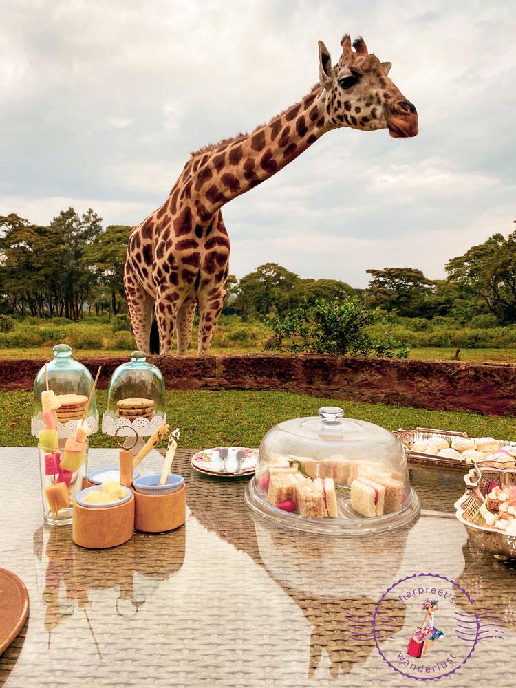 High Tea With The Giraffes