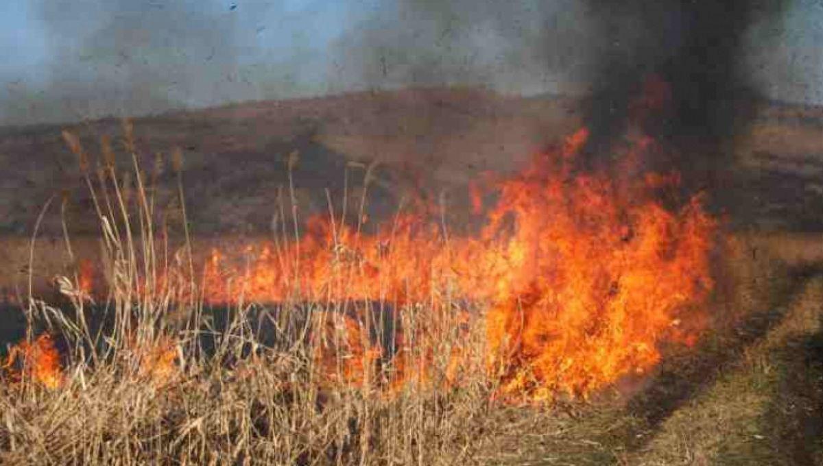 Lunca Prutului, în flăcări