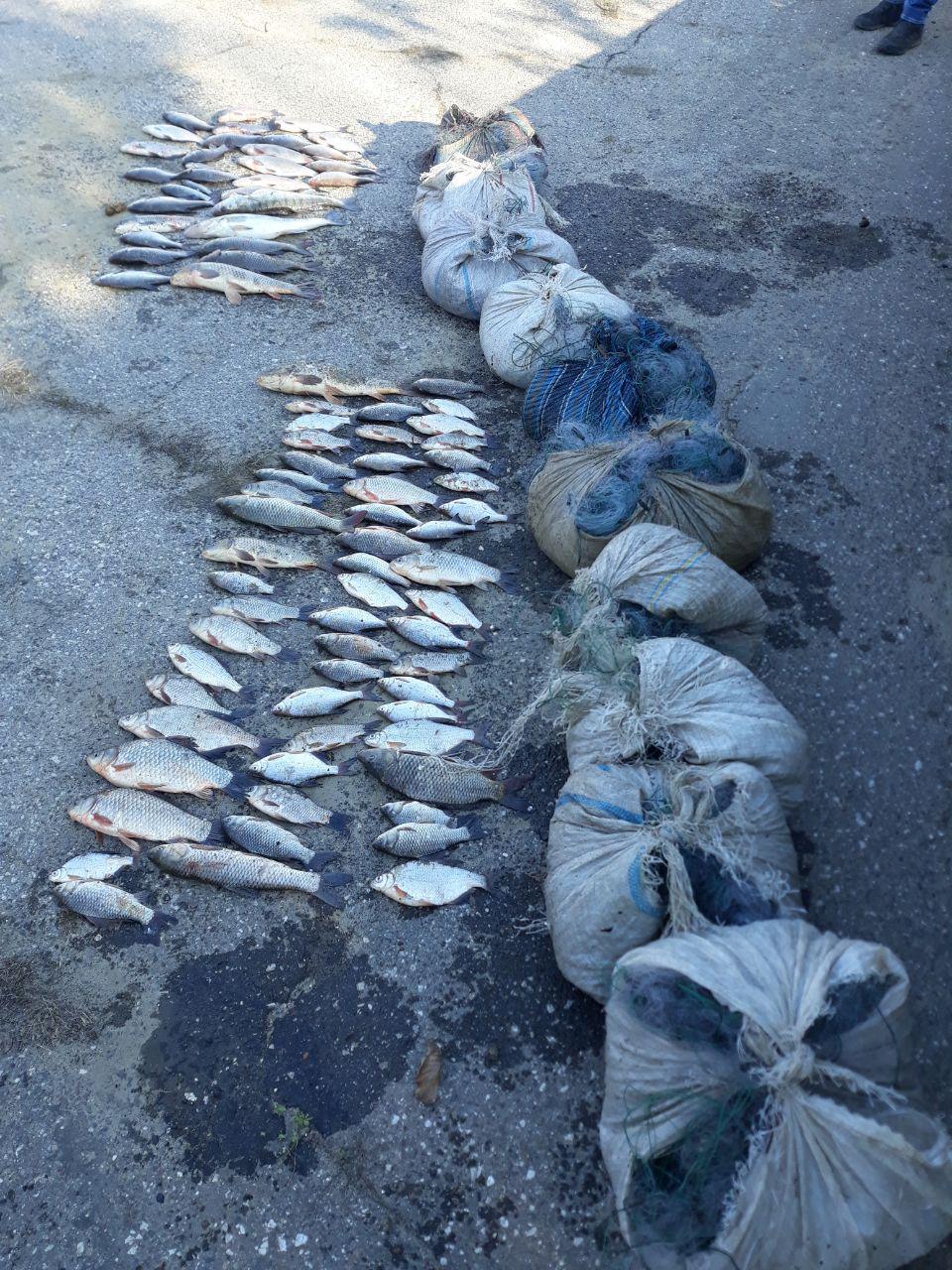 Pescuit ilegal în apele  de frontieră din raionul Cahul