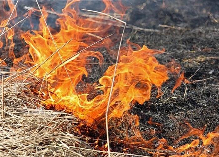 Focare de vegetație stinse de pompieri în zona de sud a țării