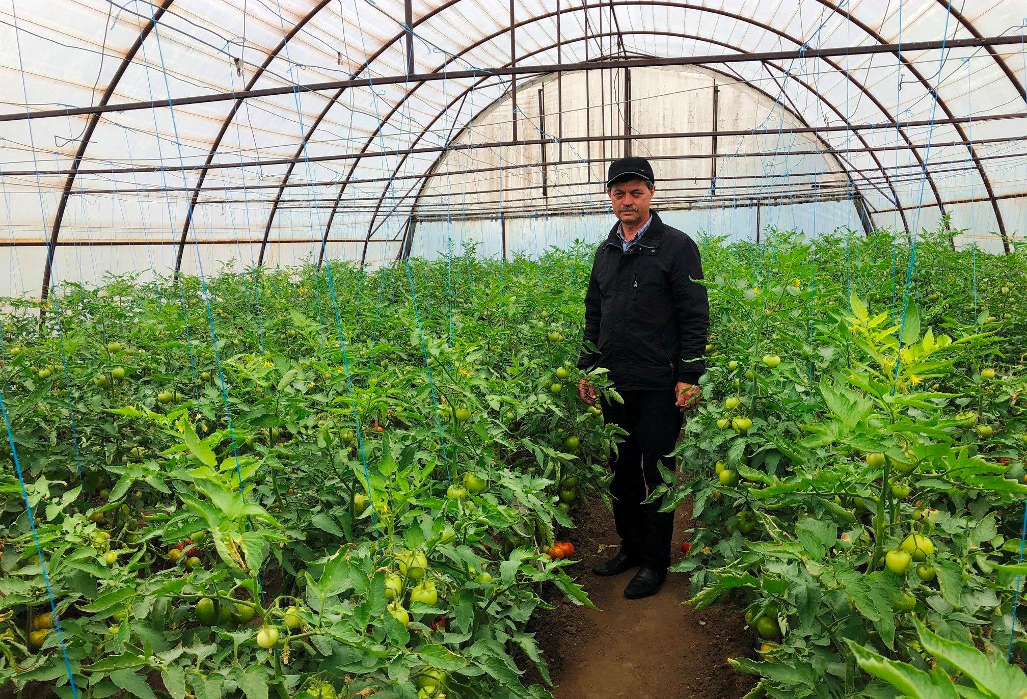 Cahulenii procură fructe și legume direct de la producători